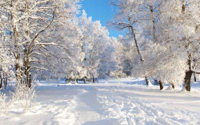 Leden – meridián močového měchýře